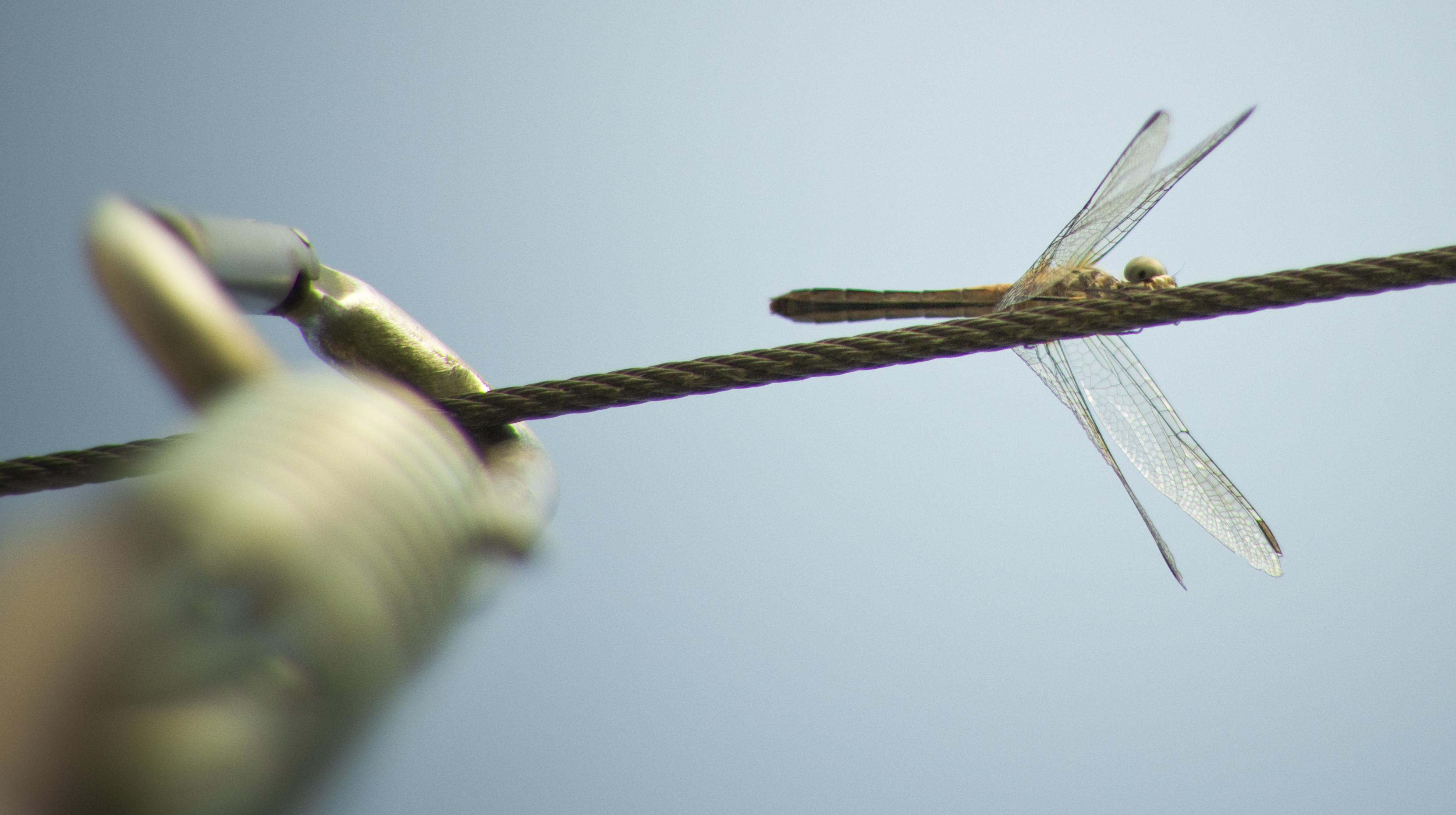 dragonflyandcaribiner